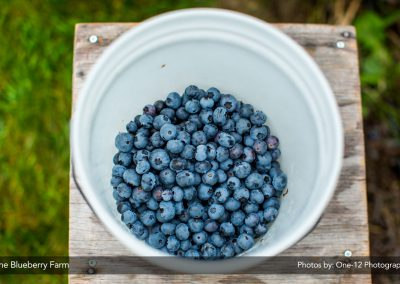 Blueberries_012